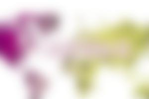 IFC国际本科预科